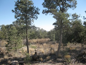 Sundance Mountain Ranches - Lot 345 - 49 Jesse James Rd